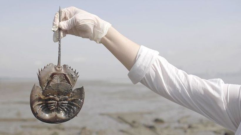 This Living Fossil May Have Saved Your Life