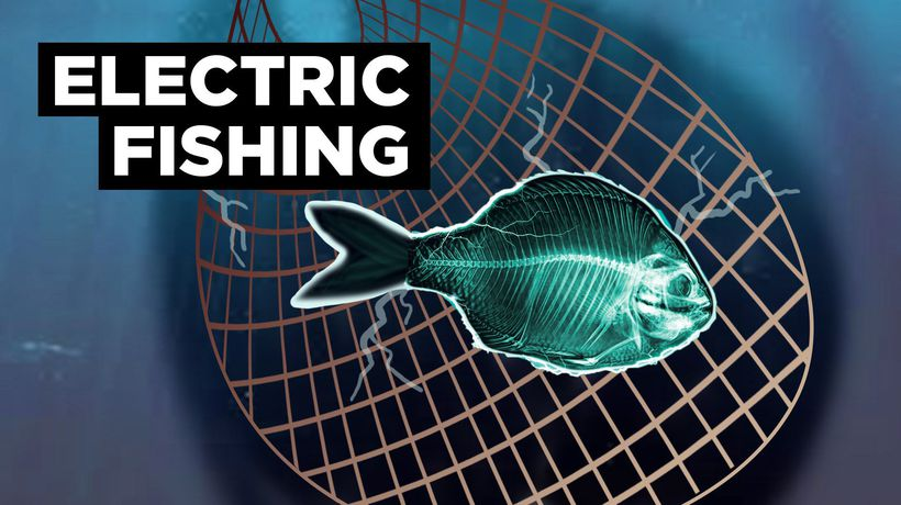 Is Electric Fishing Cheating Our Oceans?