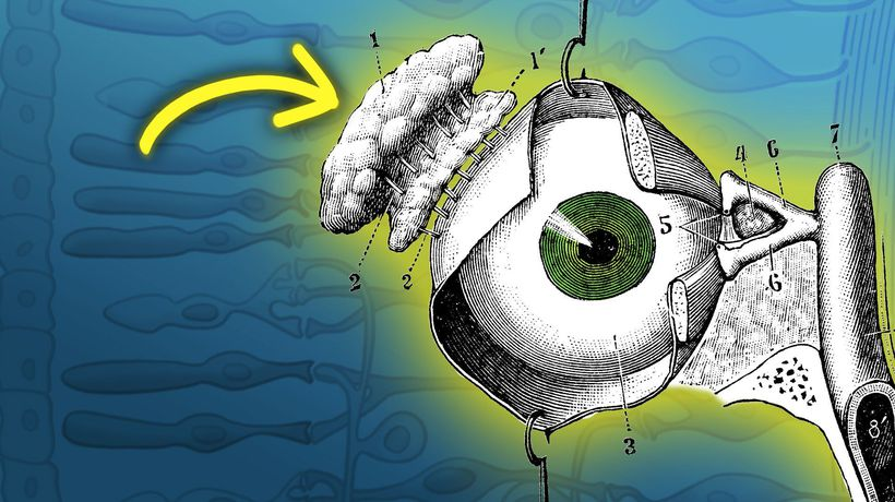 Why The Human Eye Is A Design Disaster