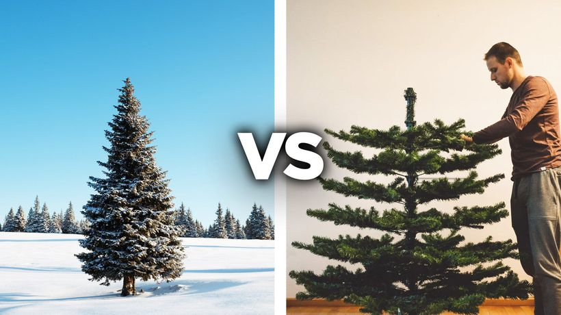 The Rise And Fall Of Real Christmas Trees