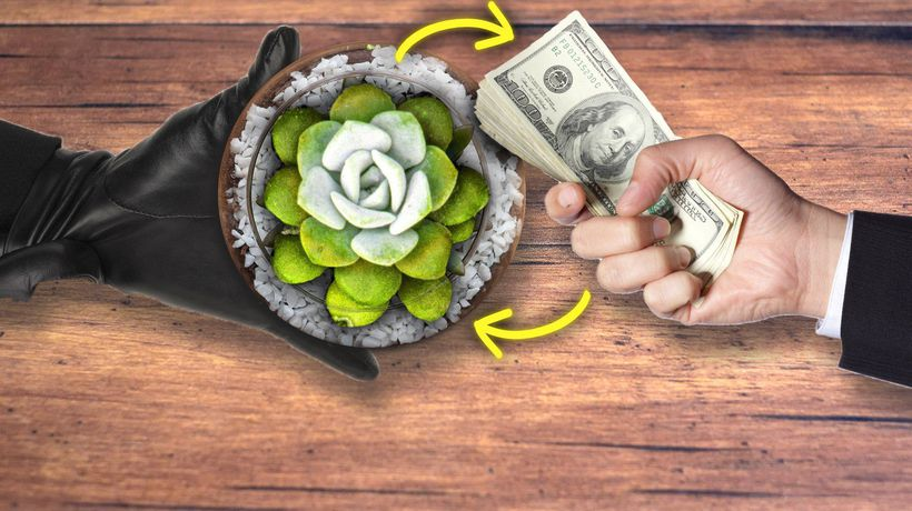 The Dark Side Of Our Succulent Obsession