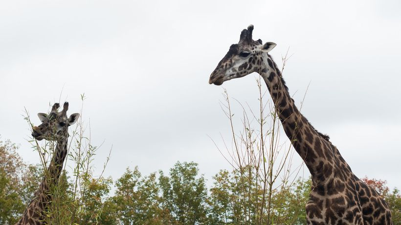 Toronto Zoo and Toronto Symphony Orchestra announce new collaboration