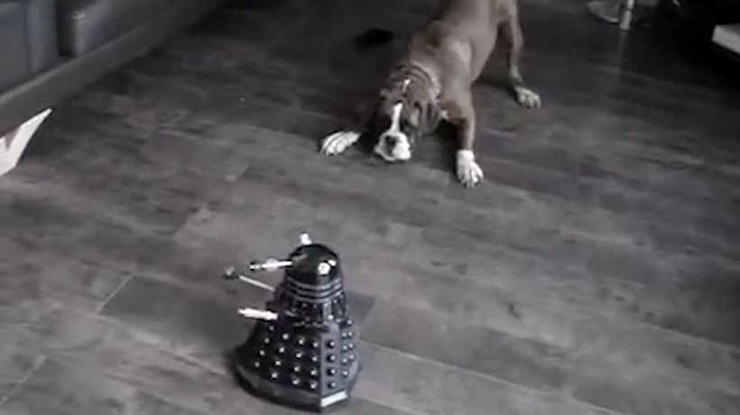 Dog barking at Dalek