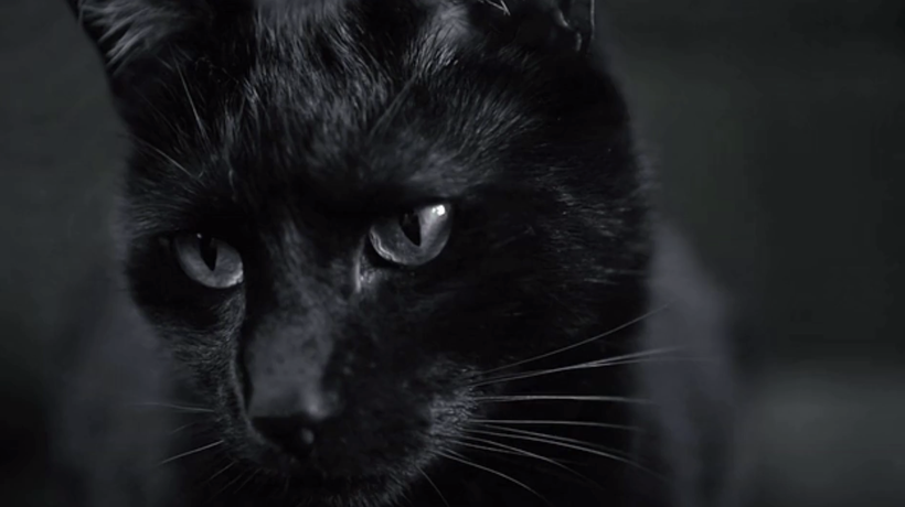 Black Cat Folklore and Superstitions Explained