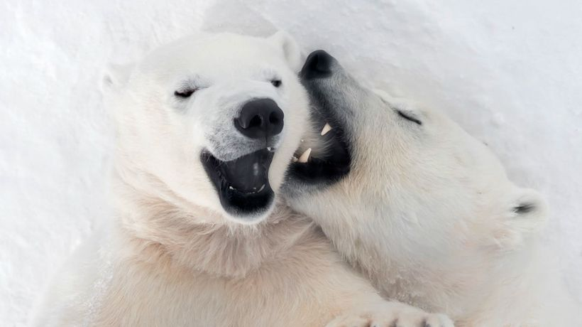 Rescued Polar Bear Pictured 'Laughing' With Her Cub In Cute Pictures