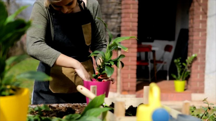 5 Foods You Can Grow in a Container Garden