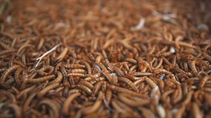 NASA Sends Thousands of Worms Into Space