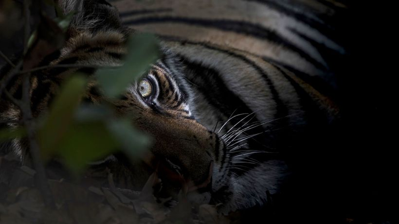 International Tiger Day: Wildlife Photographer Shares His Six Favourite Tiger Images