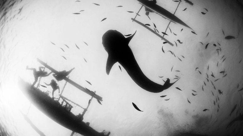 Beauty In B&W: WildArt Photographer of the Year - 'Monochrome' Category