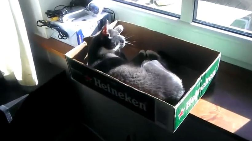 Cats and boxes: A love story