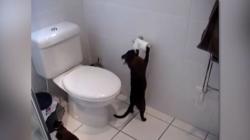'I will bring you the toilet paper, human'