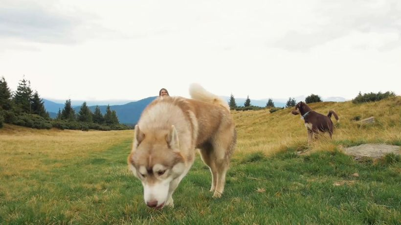 Owning a dog may lower risk of early death