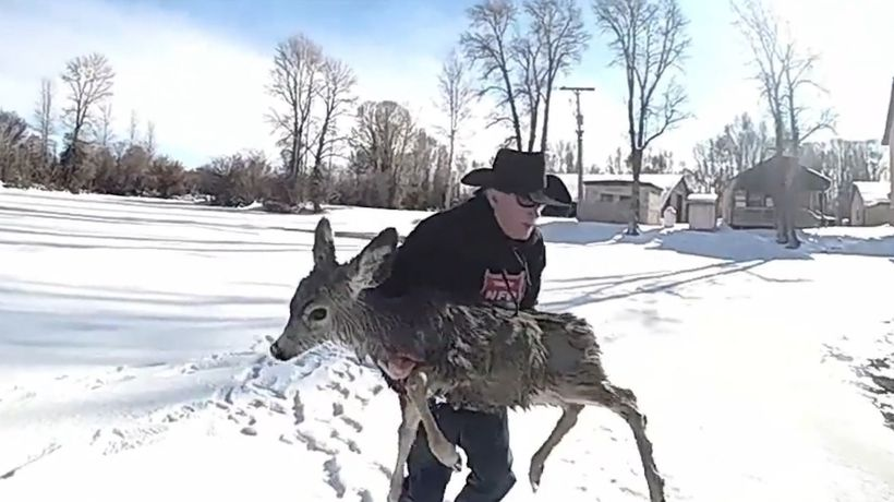 Sheriff Rescues Deer In Frozen Lake By Lasso