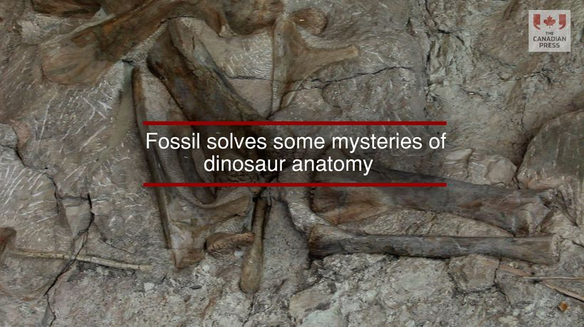 Fossil solves some mysteries of dinosaur anatomy