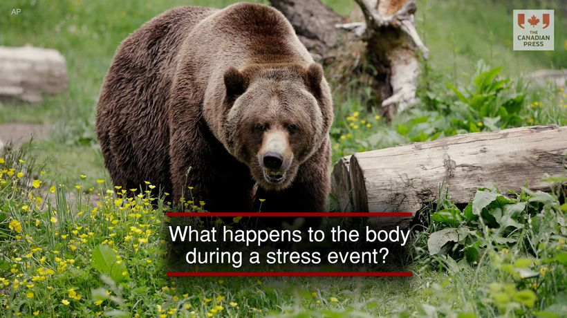 What happens to the body during a stress event?