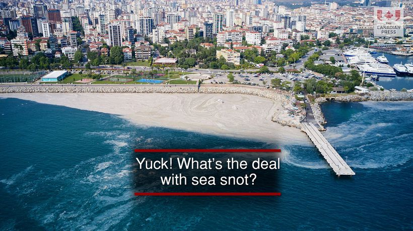 Yuck! What's the deal with sea snot?