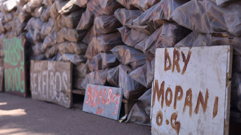 Illegal logging, a serious concern in the Magaliesberg Biosphere