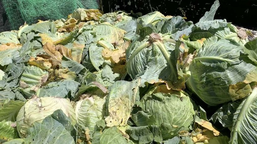 Finding solutions to eliminate food waste in a country where millions are food insecure.