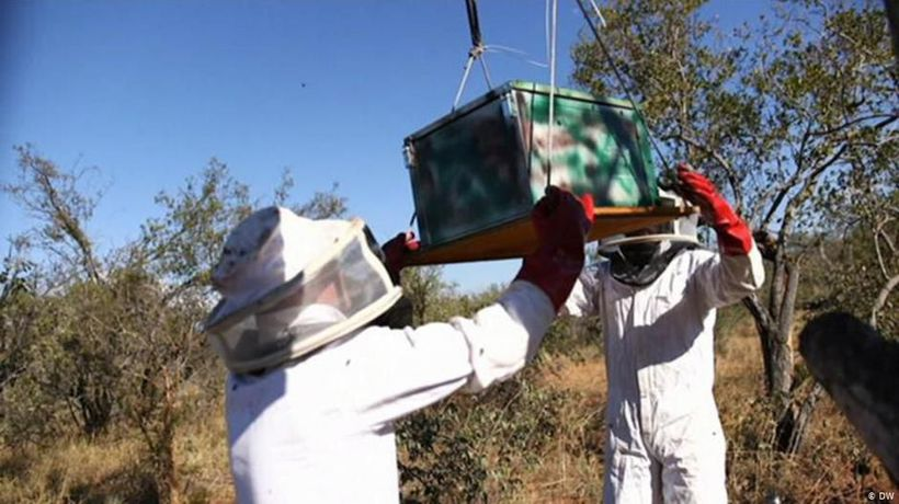 Deterrent bees in conservation