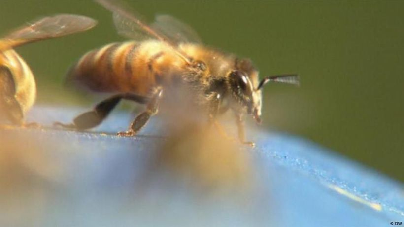 AI and bees