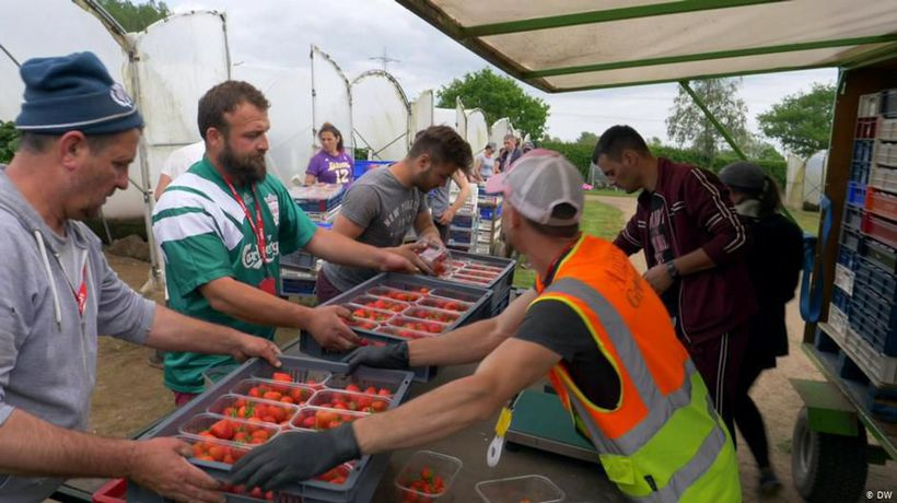 Scotland: Strawberry Pickers, Fear & Brexit