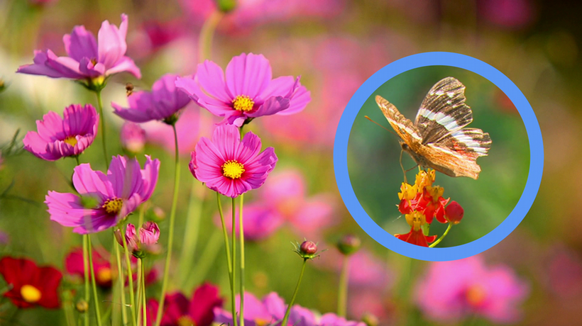 A plant's best friend - the importance of pollinators