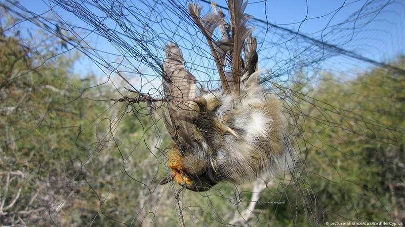 Cyprus: Bird Killer Mafia