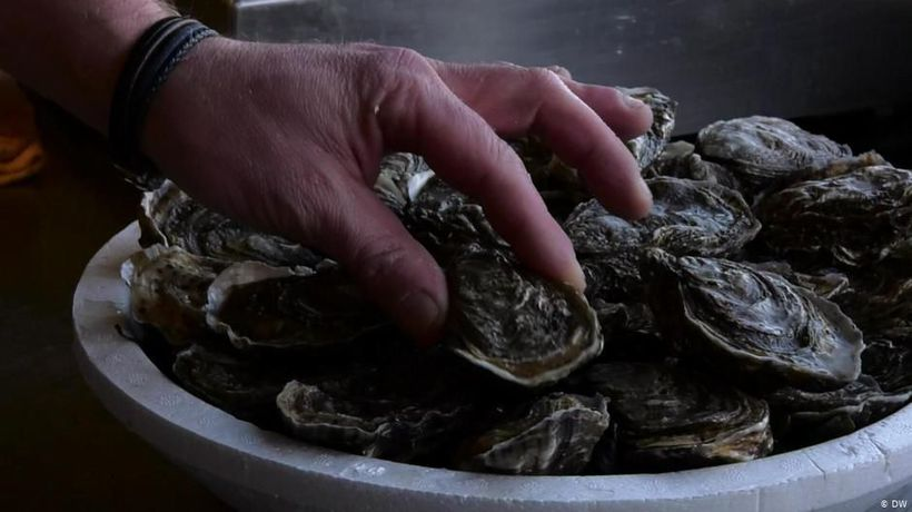 France: On Patrol for Oysters