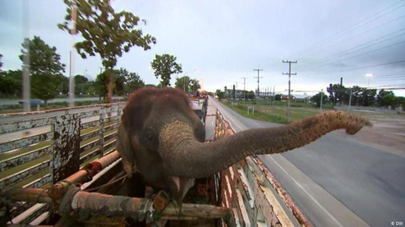 Thailand: The elephant rescuer of Chiang Mai