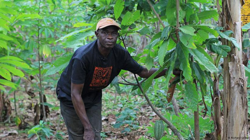 Rethinking cocoa cultivation in Ghana