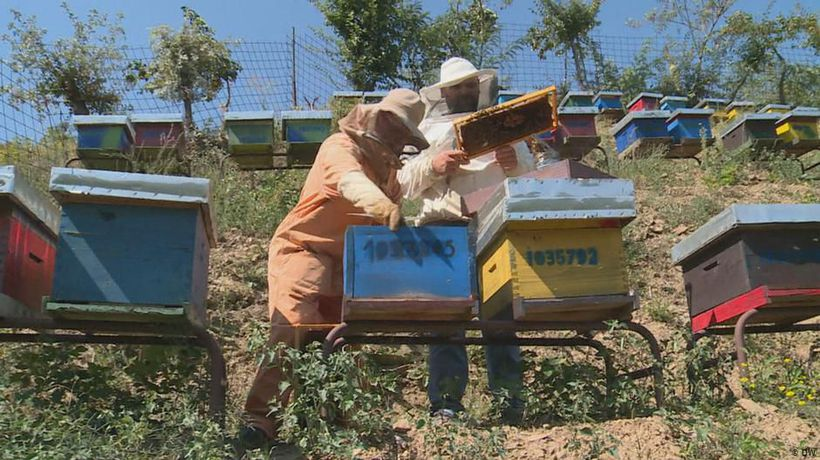 Kosovo: Organic honey from the mountains