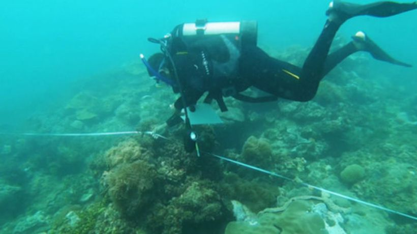 Saving the fish in the dying coral reefs off Mombasa