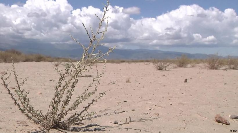Spain's plantations are facing drought