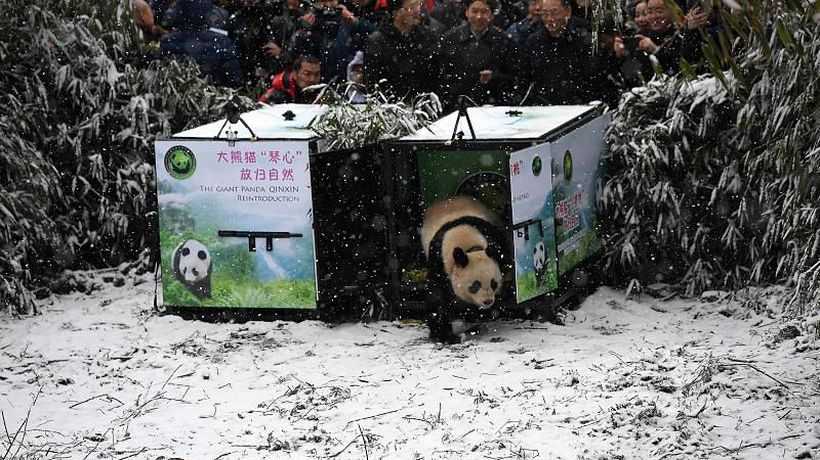 World News - Chinese landscapes transformed by snow
