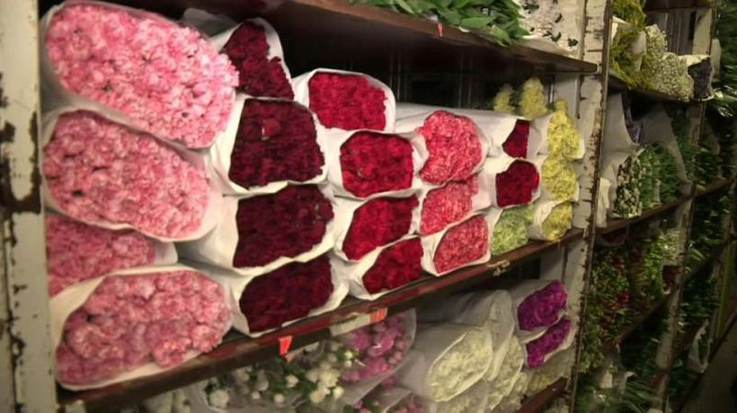 Good Morning Europe - British florists worry about the prospect of a no-deal Brexit