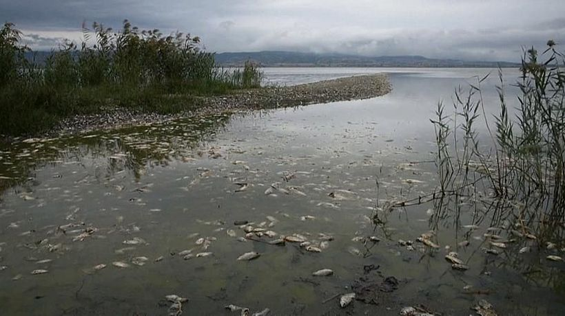 Watch: Drought kills hundreds of fish in Greek lake