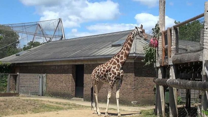 Survival of the fittest: UK zoos left reeling as they open after coronavirus lockdowns