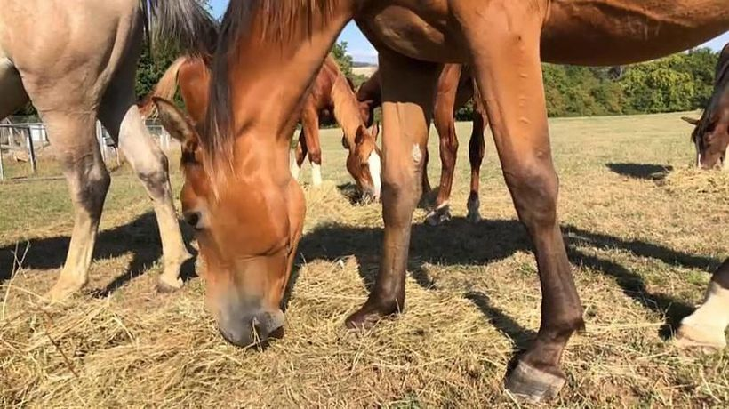French police puzzled by spate of horse mutilations across the country