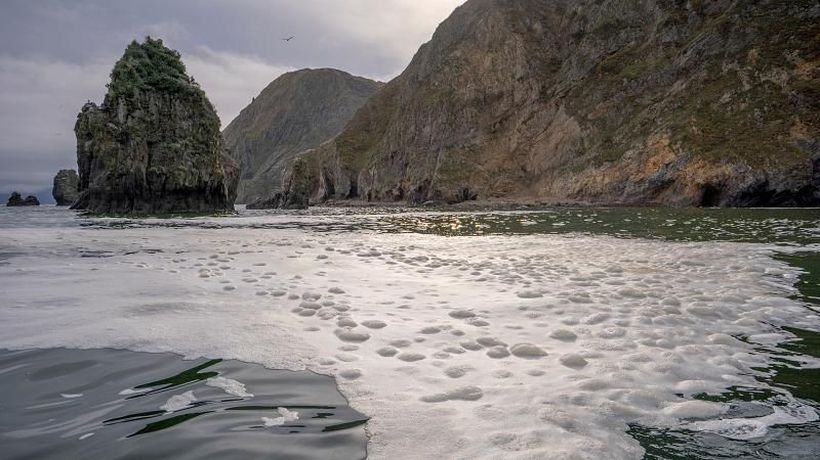 Russia launches criminal investigation into unexplained sea pollution in Kamchatka peninsula