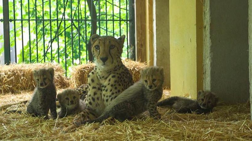 Exotic, endangered & trafficked animals in the Middle East receive UAE care