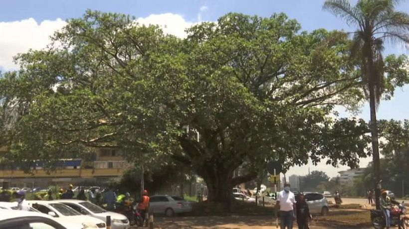 Kenya spares sacred fig tree from destruction
