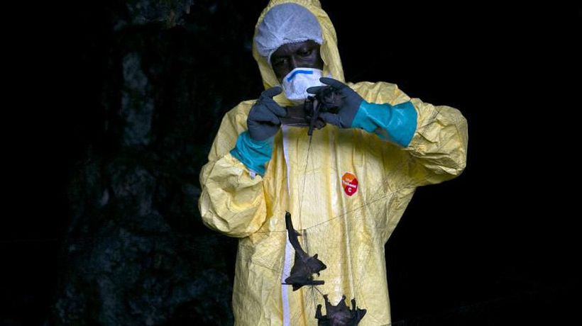 Mission to discover virus threats in Gabon jungle