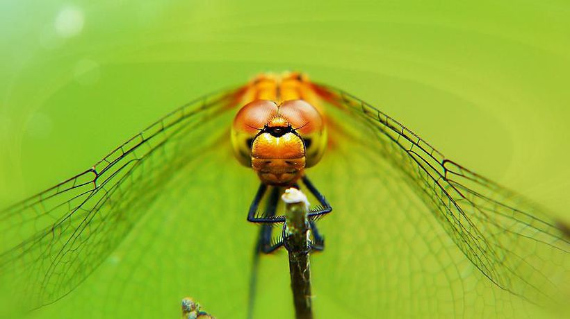 The flying skills of 300-million-year-old dragonflies are inspiring drone designs of the future