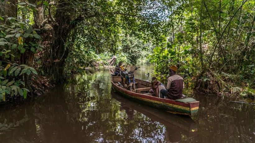 Benin's rare swamp forest 'at risk of disappearing'
