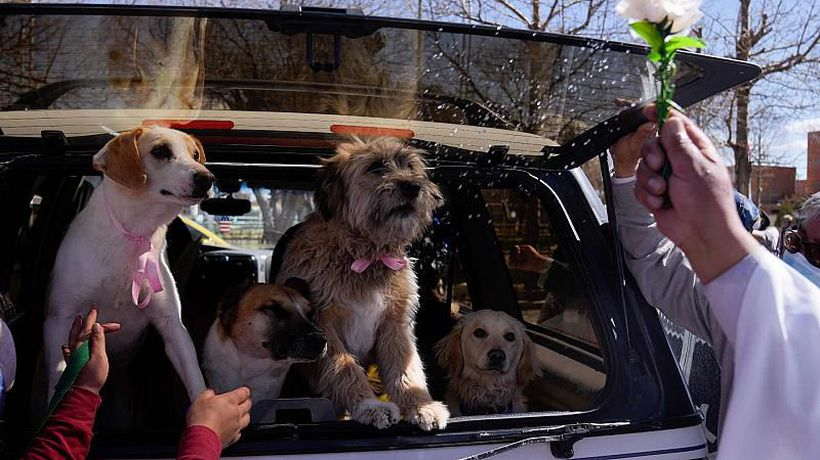 Bolivia: Dogs blessed on San Roque's feast day