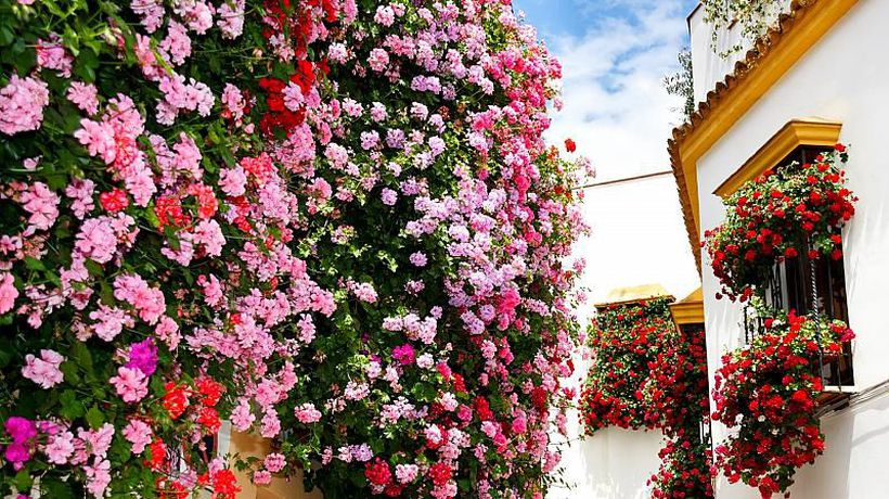 Córdoba: 'The city of flowers' is back in bloom after COVID break