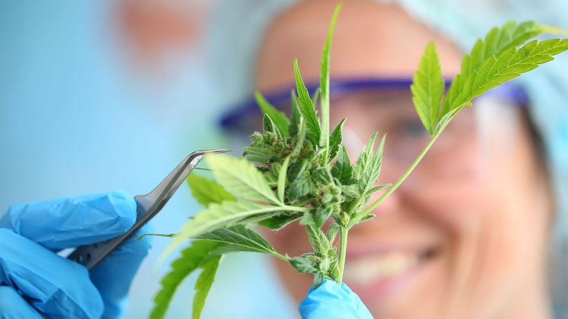 Cann Group (ASX:CAN) secures $3.2 million R&D tax incentive