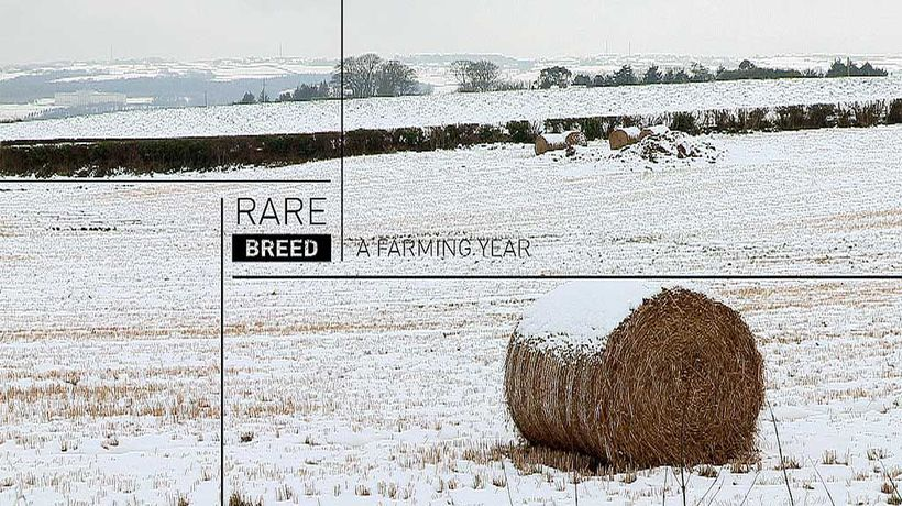 Rare Breed - July