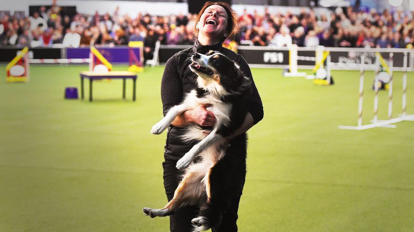 The fast and the furriest: inside the weird world of dog agility