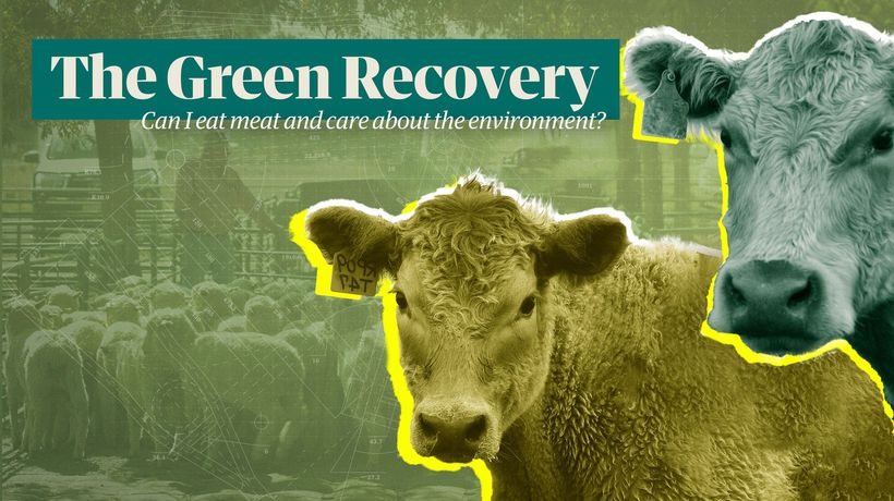 The Green Recovery: can I still eat meat if I care about the environment?